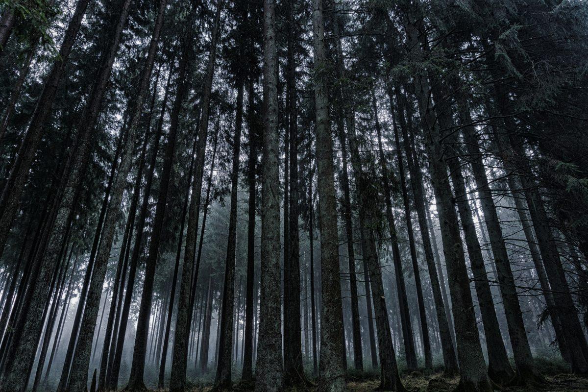 Black forest Schwarzwald Freiburg